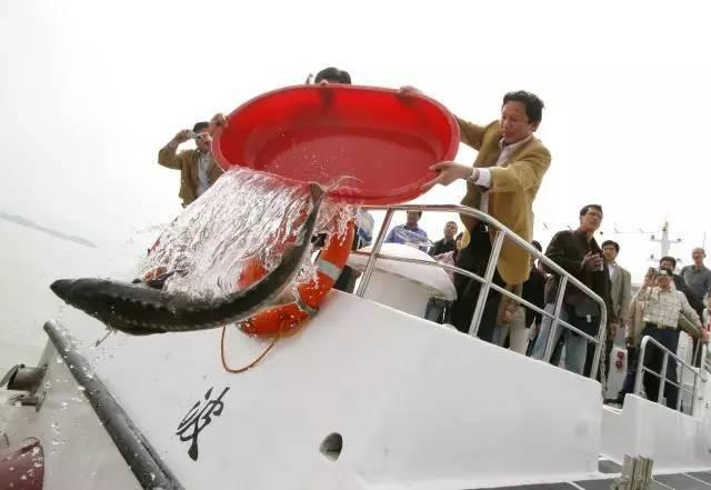 农业农村部谈长江常年禁捕:将建水域禁捕补偿制度
