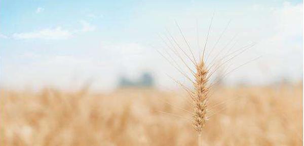 农业银行三农贷款要怎么申请?具体申请条件如下!