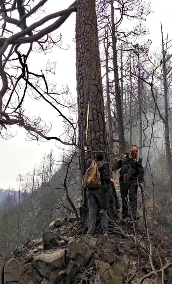 木里火灾专案组三天查万棵树确定雷击点 4民警受伤